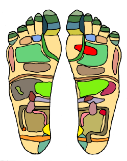 "Ref;exp;pgy foot chart, with ""zones"" supposed to correspond to body parts colour-coded"